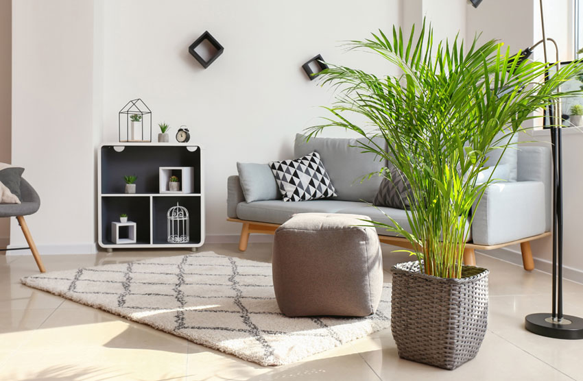 Add plants, improve indoor air quality